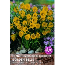 Narcissus Bulbocondium Golden Bells - 10 Pack
