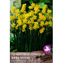 Narcissas Baby Moon - 10 Pack