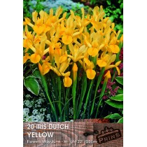 Iris Dutch Yellow - 20 Pack