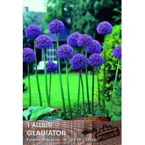 Allium Gladiator - 1 Pack