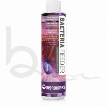 Reeflowers Bacteria Feeder