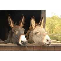 Come Say Hi To Our Christmas Donkeys -  9th - 15th Decemebr