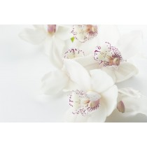 Orchid Talk & Demonstration - Saturday 14th March 2020