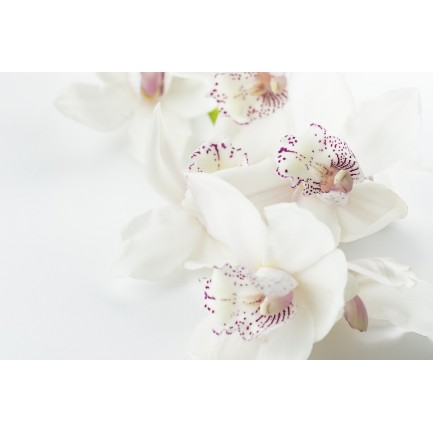 Orchid Talk & Demonstration - Sunday 24th March