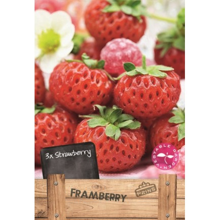 3 Framberry Strawberry