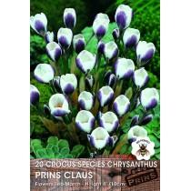 Crocus Species Chrysanthus Prins Claus - 20 pack
