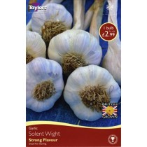 Solent White Garlic