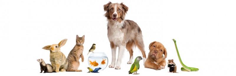 Pets & Aquatics