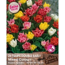 Tulips Double Early Mixed Colours - 25 pack