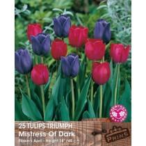 Tulips Triumph Mistress of Dark - 25 pack