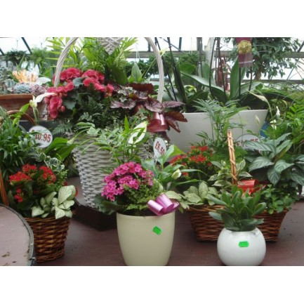 Houseplant Arrangements